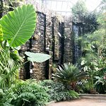 Waterfall in the orchid house.