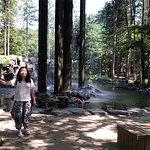 Nami Forest