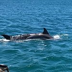 Photo de Dolphins Driven