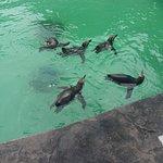 Lincoln Children's Zoo Foto