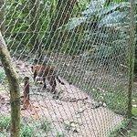 Фотография Amazoonico Animal Rescue Centre