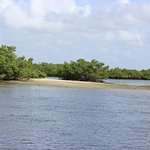 Three of the 10,000 islands of the Everglades