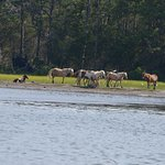 Horses in the reserve