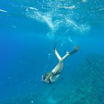 Freedive and snorkel with a huge variety of sea life in the clearest waters of Hawaii!
