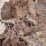 These were just a couple of the Bighorn Sheep we were able to view on the cruise.