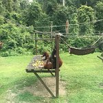 Photo of Orang Utan Sanctuary