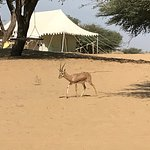 Camping Site With Deer
