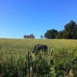 Un vieux mâle solitaire au pied de la ferme !
