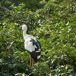 Photo de Ranganathittu Bird Sanctuary
