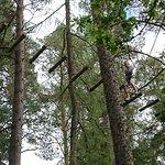 صورة فوتوغرافية لـ TreeZone Aviemore