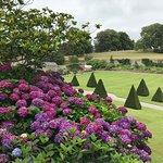 Hydrangeas in full colour.