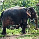 Φωτογραφία: Elephant Junction