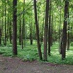 V. Stepanov Park of Culture and Leisure