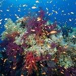 carless reef