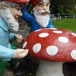 The Gnome Reserve & Wild Flower Garden