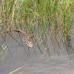 Foto de Airboat In Everglades