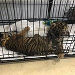 Photo of Tiger Kingdom Phuket