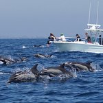 Us and the dolphins!