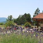 Ristorante del Camping Village La Verna