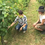 Portugal Farm Experience - Wine Tasting in a 19th-Century Winery
