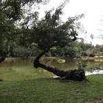 Foto de Parque Faroupilha (Parque de la Redención)