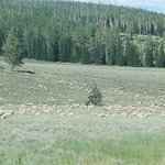 The flock of sheep