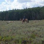 シーダーブレイクス国定公園の写真