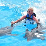 Dolphin Discovery 4