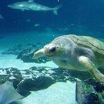 turtle in large tank