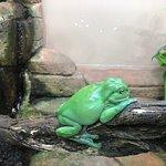 A happy frog!