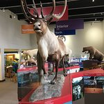 Foto de Anchorage Alaska Public Lands Information Center