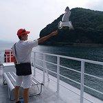 看著海鷗自由的飛翔.心情也愉快了