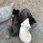puppies galore