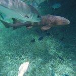 Nurse sharks and fish at shark ray alley