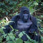 Zdjęcie Bwindi Impenetrable National Park