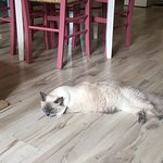 Fotografia lokality Cat Cafe Club