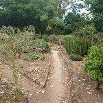 Photo of Orto Botanico di Palermo