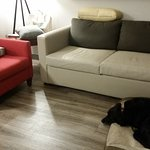 great flooring for pet owners