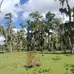 Foto de LeBlanc Swamp Tours