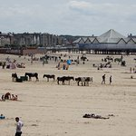 Traditional sandy beach with donkeys too