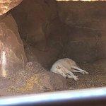 Φωτογραφία: Bearizona Wildlife Park