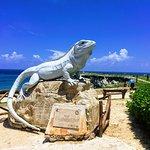 Bild från Punta Sur