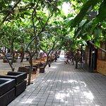 Kampung Coklat照片