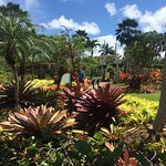 Photo of Dole Plantation