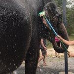 Photo of Green Elephant Sanctuary Park