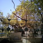 Bilde fra Hippocrates Tree
