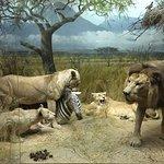 Valokuva: Luonnontieteellinen museo