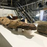 fossilised wood - most likely a branch of a very large tree