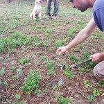 Photo of Azienda Agricola Semboloni Fabio