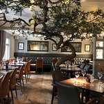 Dine under our 200 year old Olive trees adorned with fairy lights